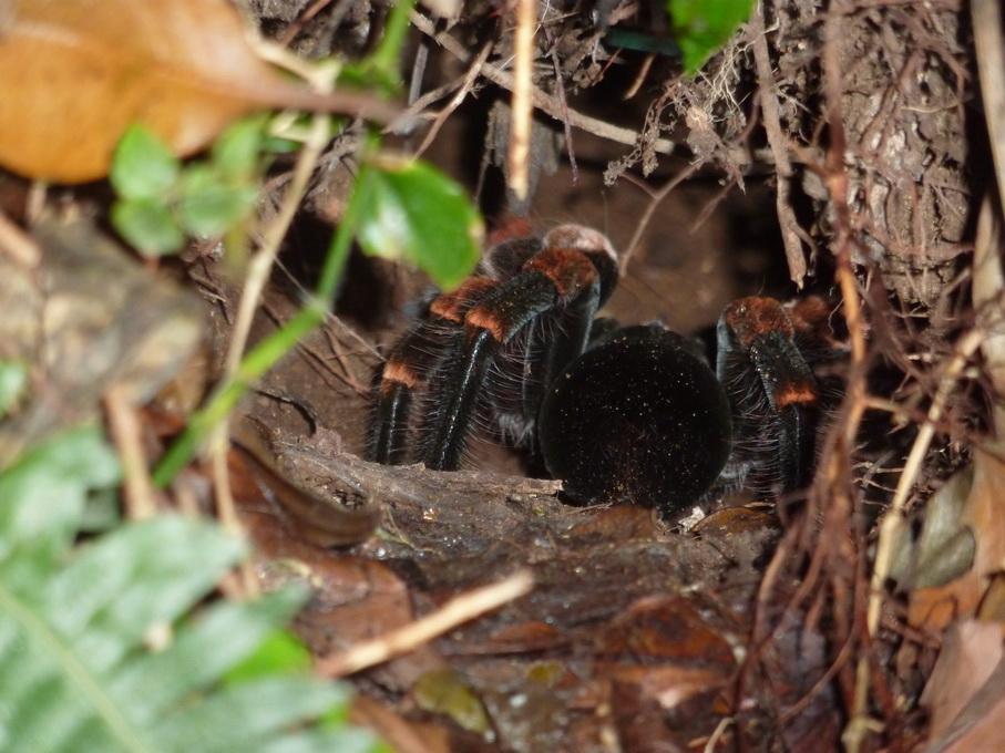 Monteverde-1120137_redimensionner