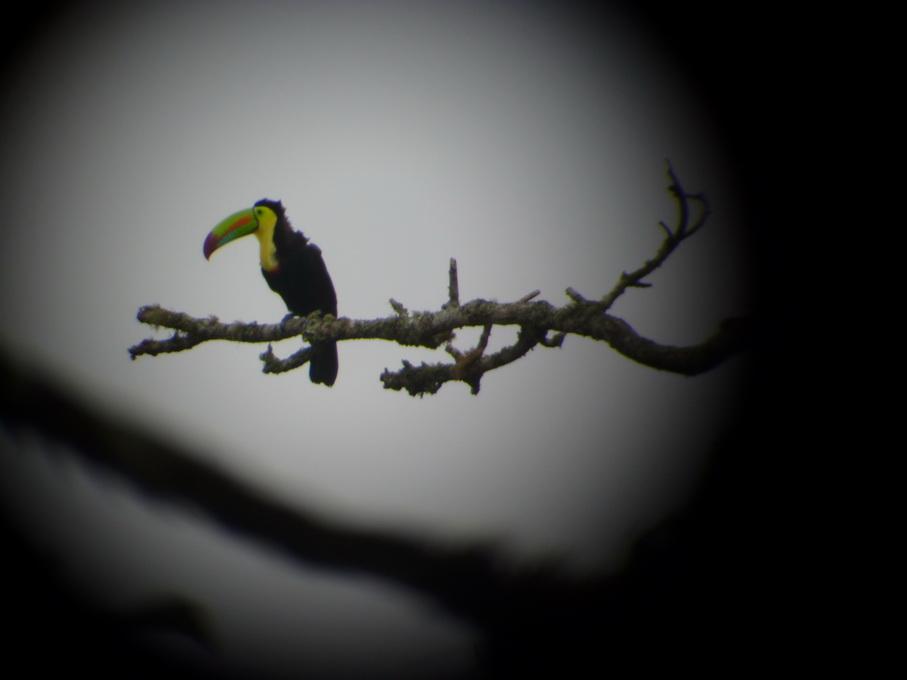 Monteverde-1120126_redimensionner