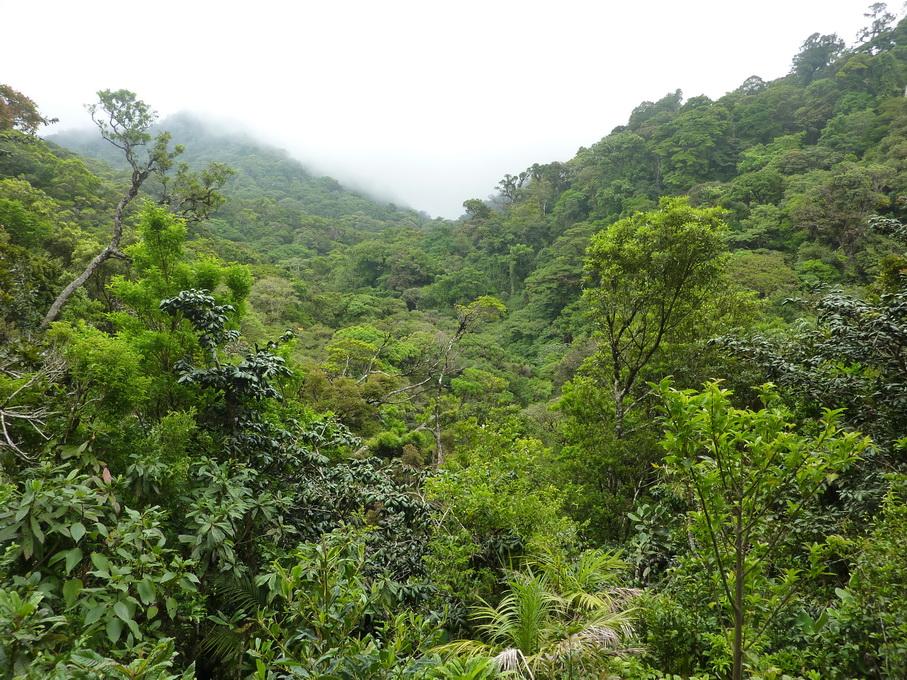 Monteverde-1120157_redimensionner